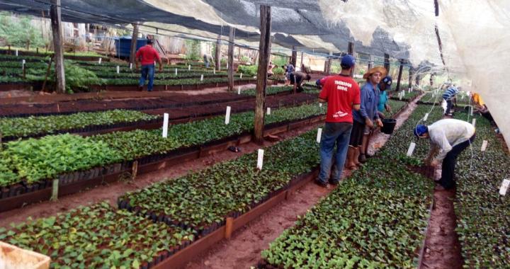 Viveiro Municipal do distrito de Terra Roxa é reativado pela Secretaria de Agricultura