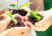 Secretaria de Agricultura cria Departamento de Licenciamento para apoiar atividades de pequeno impacto ambiental