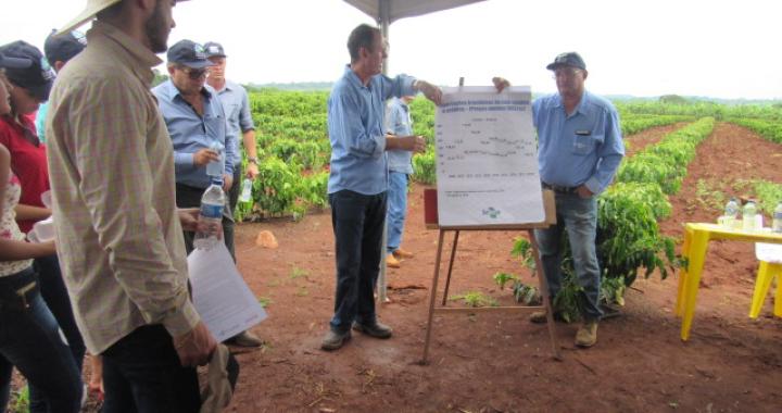 Secretaria de Agricultura realiza Dia de Campo no distrito de Terra Roxa